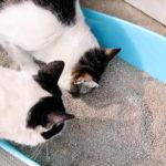 """""""Mój kot nie chce korzystać zkuwety!"""""""