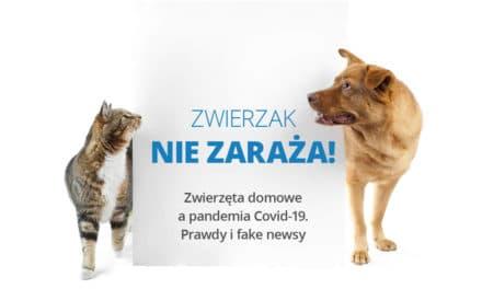 Zwierzęta domowe apandemia Covid-19. Prawdy ifake newsy