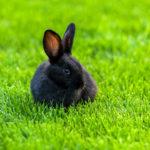 Wzgodzie znaturą! Najnowsze trendy na rynku karm dla królików igryzoni