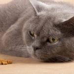 Mój kot nie chce jeść! Czy jest na to rada?