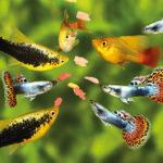 Suche – tak, sztuczne – nie! Nowoczesne pokarmy dla ryb akwariowych.