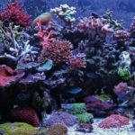 Akwarium przyszłości Siedem trendów kształtujących oblicze akwarystyki