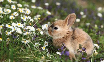 Nie tylko kolby. Nowe trendy wprzysmakach dla królików igryzoni!