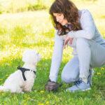 Czy Twój pies dobrze się odżywia? Jego… kupa prawdę Ci powie!