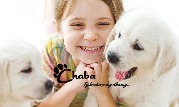CHABA – Ty kochasz, my dbamy