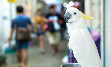 Zakaz sprzedaży zwierząt wsklepach Rozwiązanie przyszłości czy utopia?