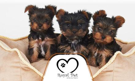 Royal Pet – Dbamy okażdy szczegół!
