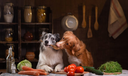 Nutraceutyki wdiecie psa Dlaczego warto je stosować?