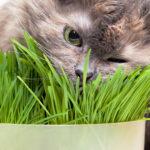 Dlaczego kot lubi trawę?