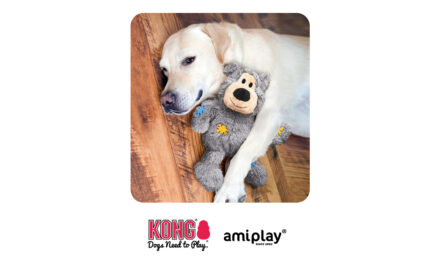 Firma amiplay, dystrybutor marki KONG, przedstawia: Wild Knots Bear