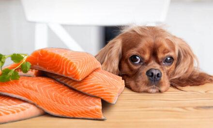 Ryba wpływa na wszystko! Dlaczego warto karmić psy ikoty karmami na bazie ryb?