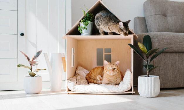 Wzbogacanie środowiska kota Moda czy konieczność?