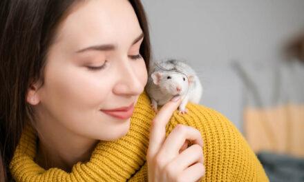 """Sprzedajemy zwierzaka! Jak """"skomponować"""" wyprawkę dla szczurów?"""