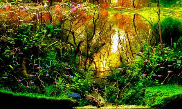 """Podwodna """"dżungla""""? Nic prostszego! Siedem rad, jak dbać orośliny wakwarium"""