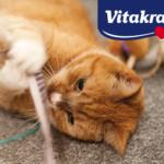 Nowość dla kotów od Vitakraft!