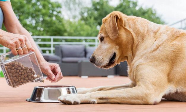 Żywienie psów ikotów owrażliwym przewodzie pokarmowym