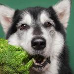 Warzywa, owoce izioła wdiecie psa. Potrzeba czy fanaberia?
