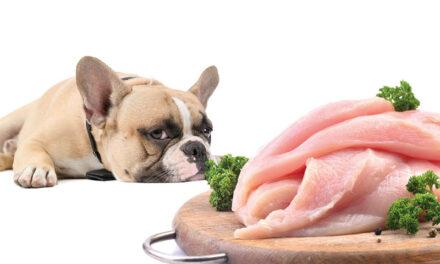 Czy kurczak to zło? Jak to jest ztą alergią?