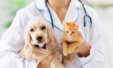 Karmy dla psich ikocich alergików