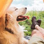 Na letnie wyprawy Jak skompletować ekwipunek dla psa?
